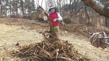 복숭아 밭의 칡이야기(도랑치고 가재잡고, 칡즙도 맛보고)