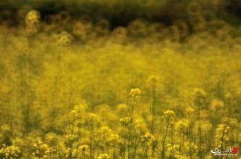 삼락이야기 : flower-#14