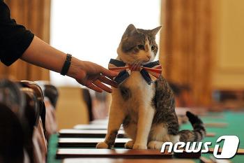 [붓다엄마의 고양이 이야기]세계의 밥값하는 고양이들