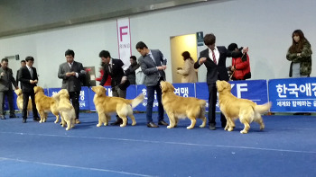2014 서울 FCI 국제 도그쇼
