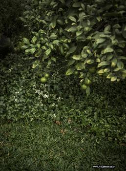 양평 들꽃 수목원으로의 짧은 여행. by 포토테라피스트 백승휴