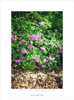 [5D] 꽃이 핀 자리