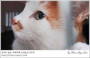 [적묘의 고양이]19살 노묘,묘르신 병원 나들이,꼬리종양,피 사진 있어요