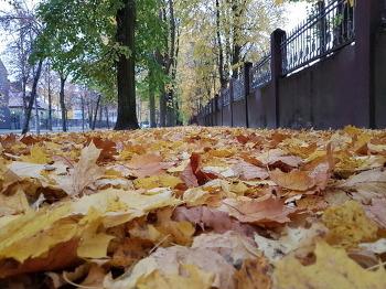 지천으로 깔린 낙엽 밟으니 또 한 세월이 가네