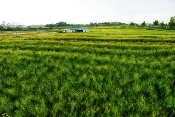 고창 학원농장