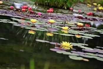 관곡지 연꽃테마파크