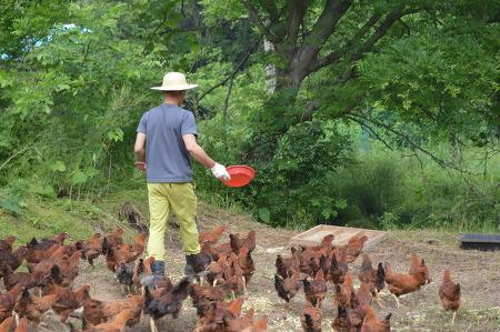 토종닭 키우기