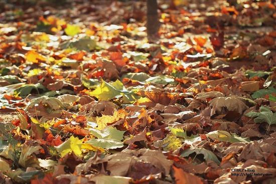가을엔 ...