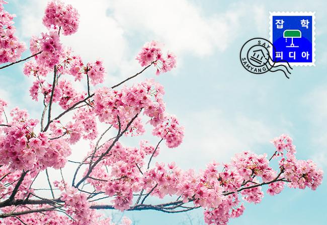 [그대라는 꽃, 더 알고 싶어요] 지적인 '벚꽃 비기닝'을 위한 4가지 숫자