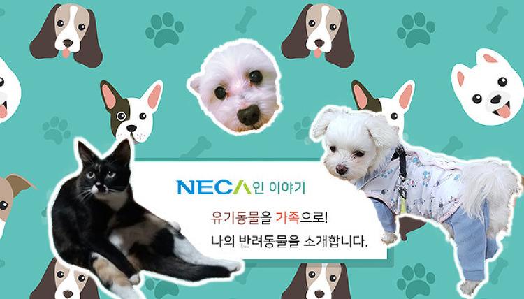 [네카인 이야기] 유기동물을 가족으로! 나의 반려동물을 소개합니다!