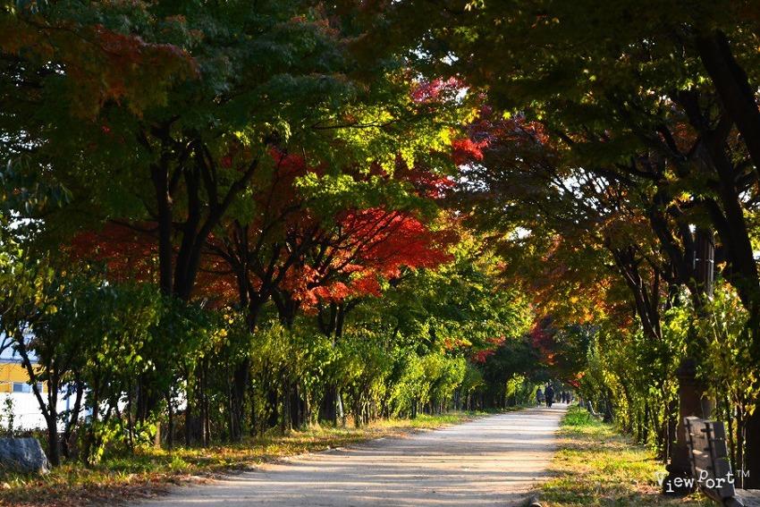 서울 단풍 예쁜 곳  안양천 산책로 - 서울 가 볼만 한 곳