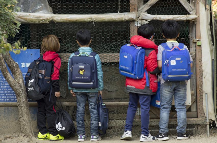 닭장 앞 아이들
