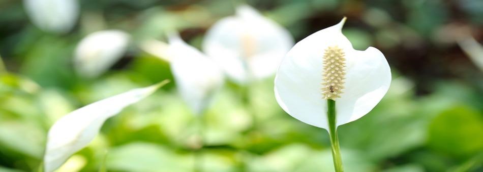 환기가 어려운 겨울철에는 식물로 공기 정화하자!