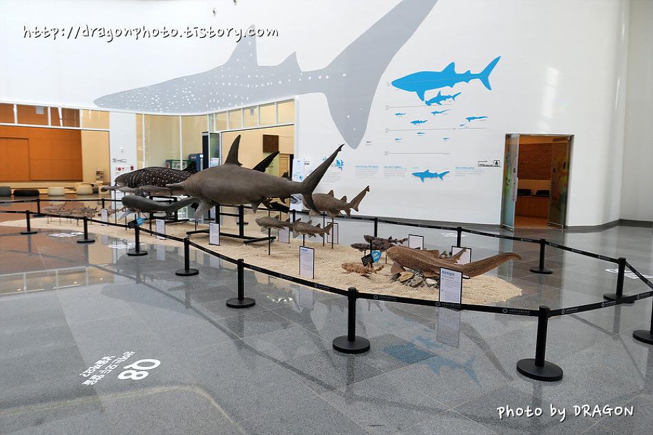 [서천여행]국립해양생물자원관 씨큐리움, 해양생물자원의 문화공간
