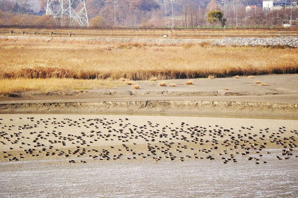 1+1 = DMZ tour + Birding tour (10% Off)
