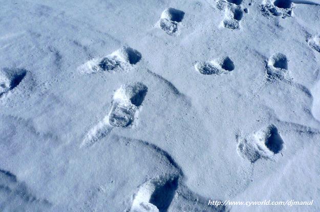 우리나라에서 천지에서 스키타본사람있어? 18편