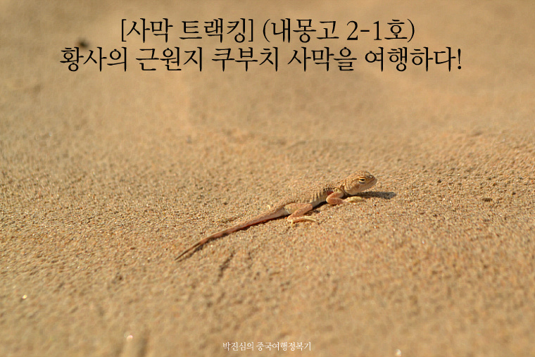 황사의 근원지 쿠부치 사막을 여행하다! [사막 트랙킹] (내몽고 2-1호)
