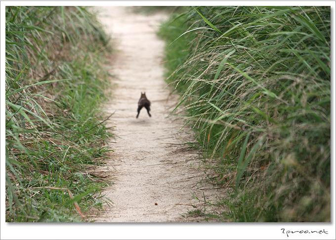 도망가는 청솔모