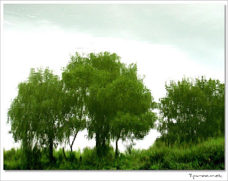 한여름 갑천 상류 풍경