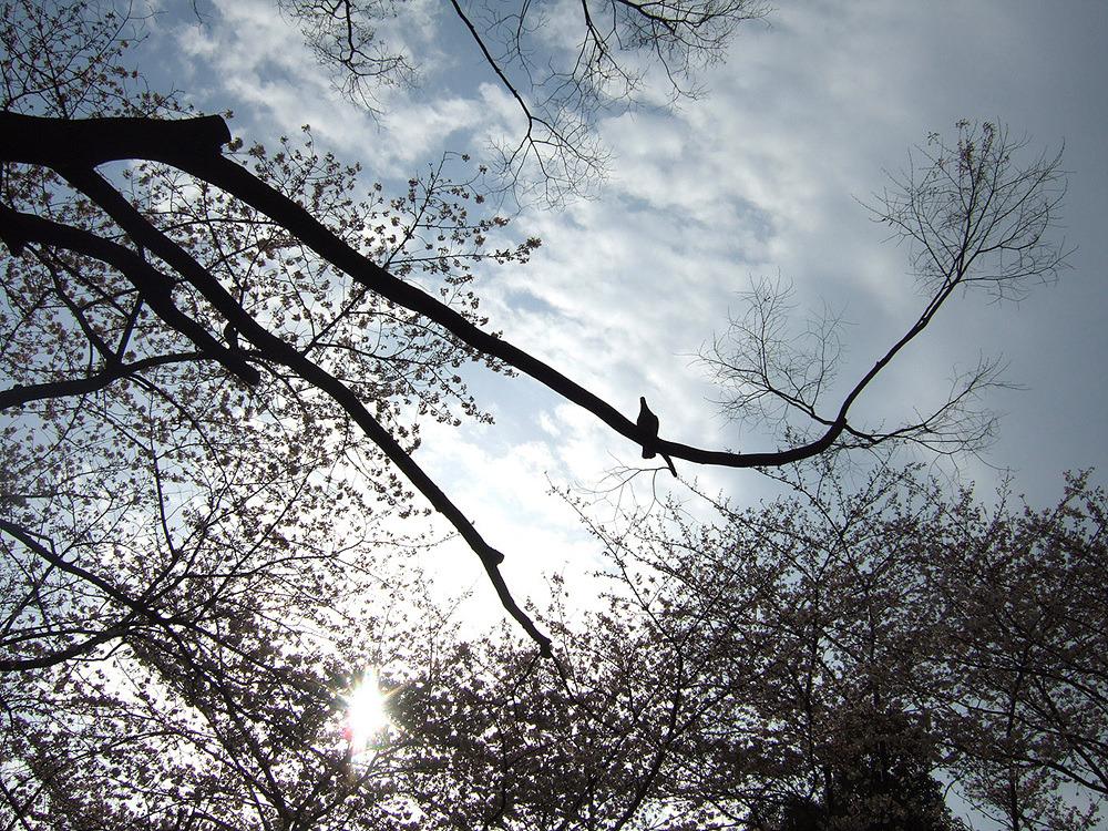 일본여행 - 다음 이야기 : 1550A950513CB87D206959