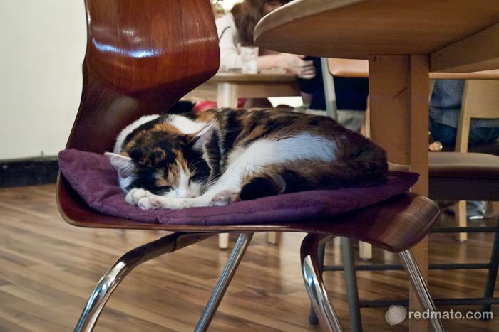 잠자고 있는 고양이