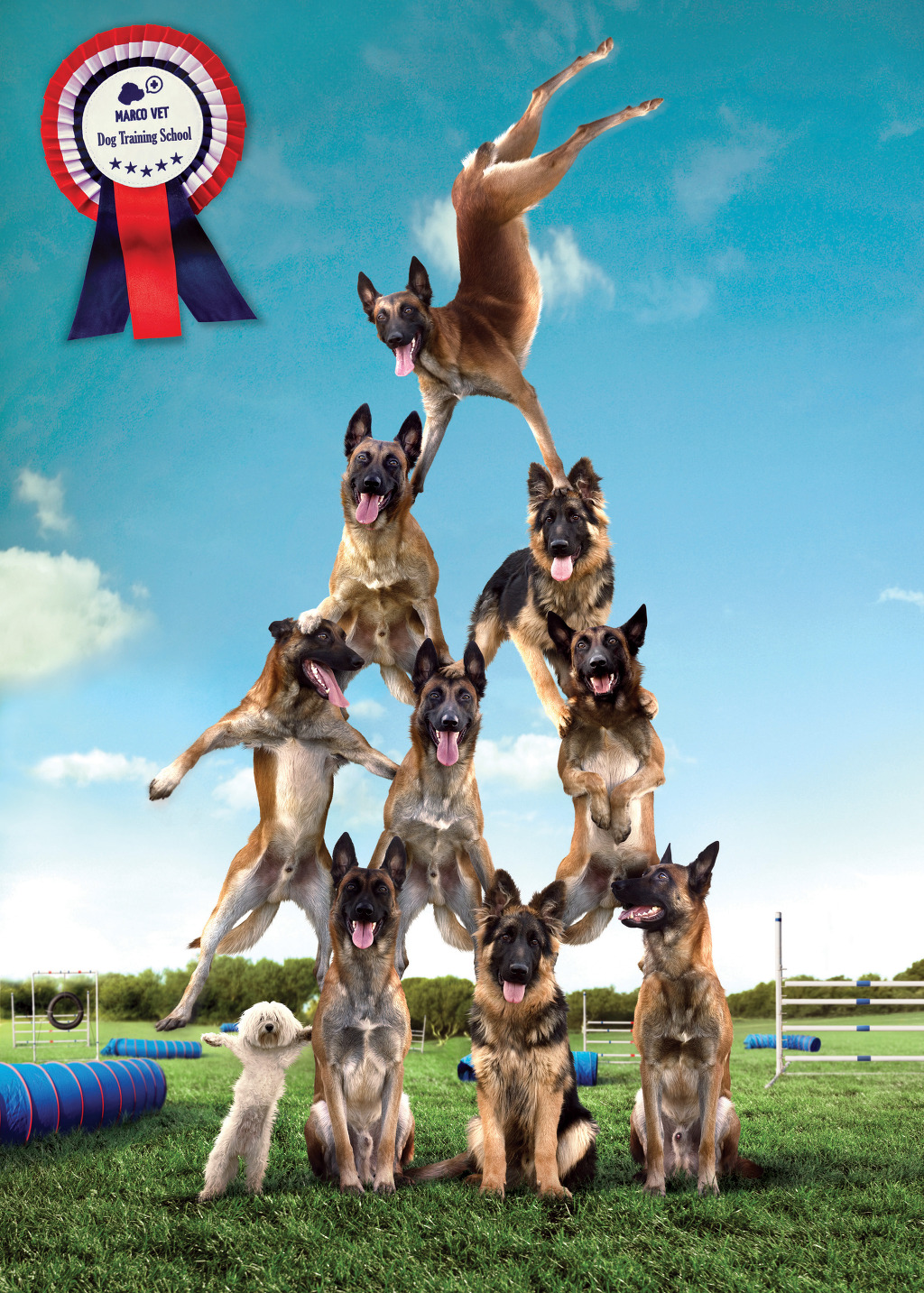 MARCOVET - Dog Trainig School: Pyramid
