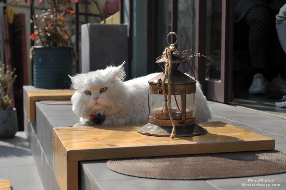 이중섭거리의 고양이