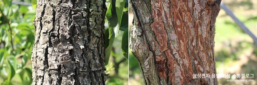 배껍질이 제거된 나무