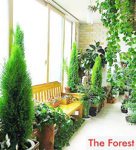 더숲의 정원이야기 :: 아파트 실내조경/실내정원 꾸미는 방법