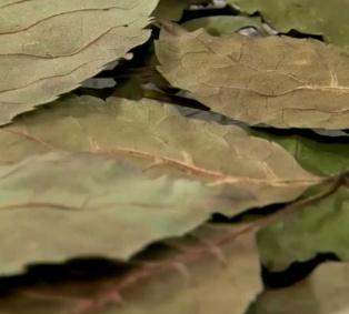말린 물푸레나무 잎