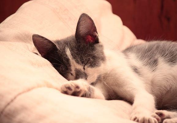 잠_고양이