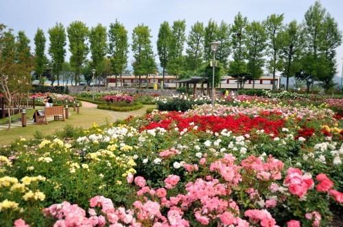 삼성물산 건설부문 봄꽃축제6