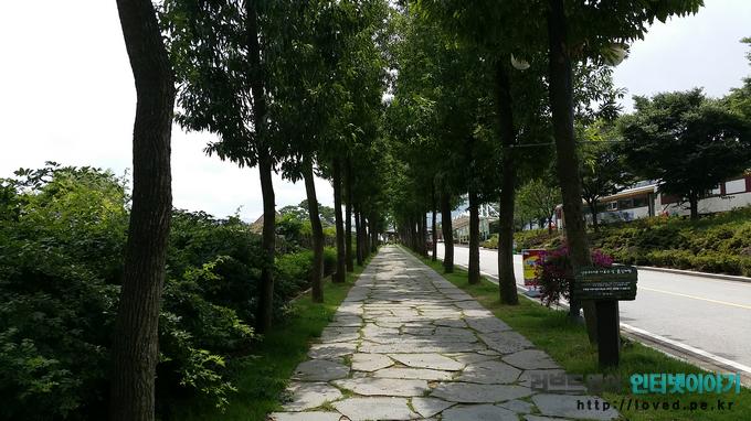 곡성 섬진강 기차마을 가로수 길