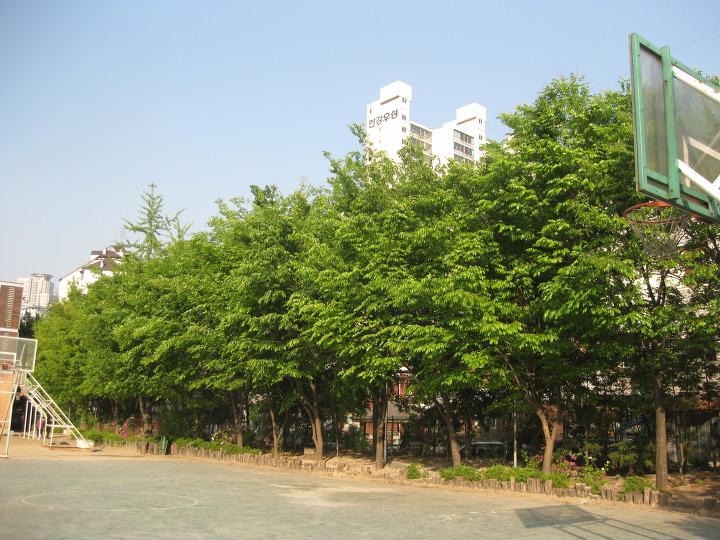 2009년 신양중 운동장 뒤