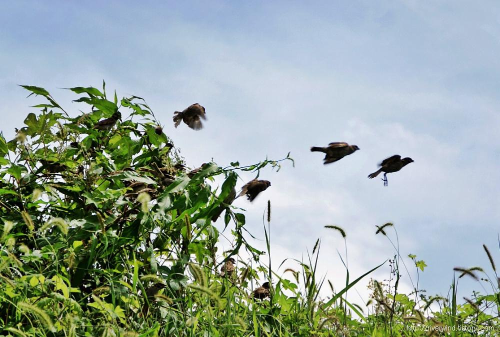 참새들의 총알 점프