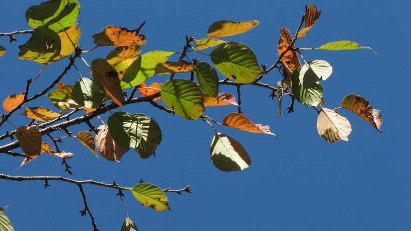 가을 나뭇잎