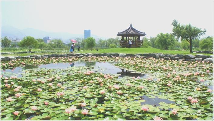 삼락공원 연지(蓮池)와 팔각정::OmnisLog