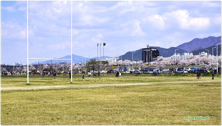 삼락공원 벚꽃