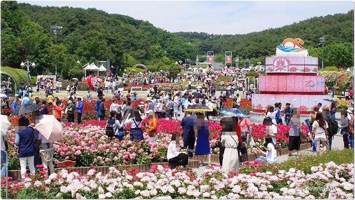 OmnisLog :: 장미축제-울산대공원 장미원