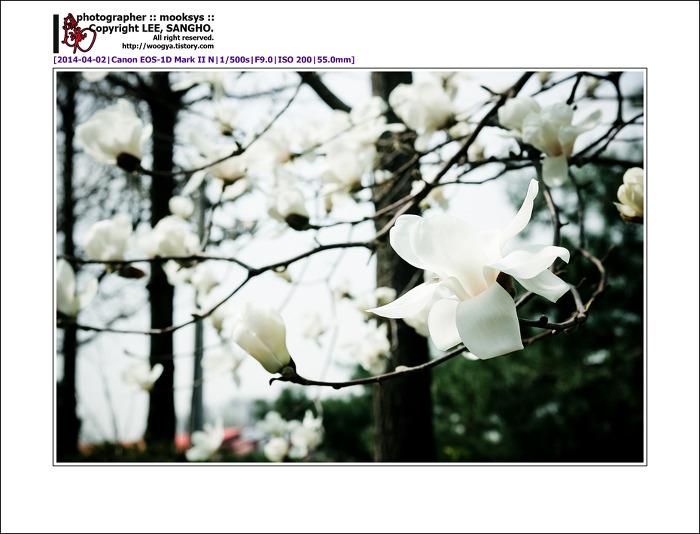 2014.04.02 성일정보의 봄