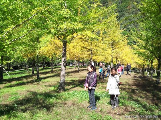 비밀의 정원 - 홍천 은행나무숲
