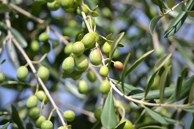 식물성스쿠알란