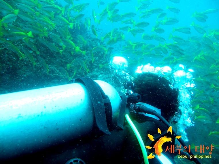 세부 스킨 스쿠버다이빙 PADI 오픈워터