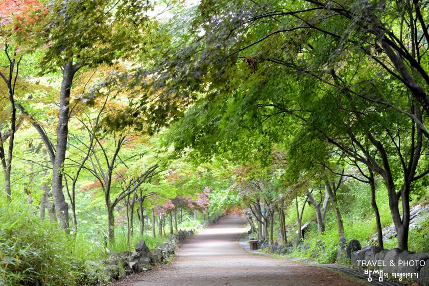 비가 와서 더 좋았던 숲속 나들이, 함안 입곡군립공원