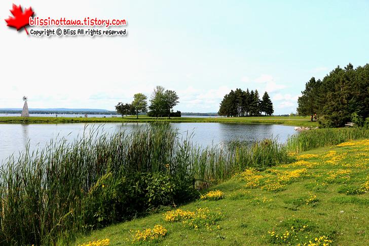 캐나다 오타와 니피언 서쪽 공원 캐나다구스 캐나다 기러기떼
