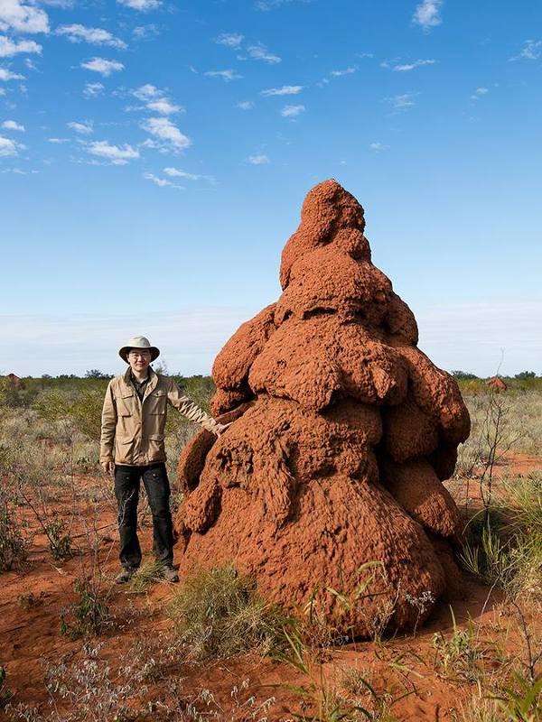 서호주, 개미집의 여러가지 형태