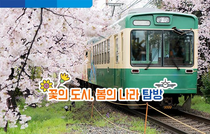 꽃의 도시 마쓰야마로 떠나볼까요? 봄의 나라 탐방
