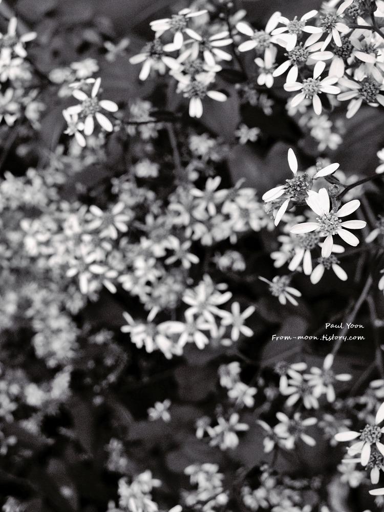 [포토에세이] 사라진 들꽃