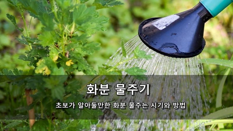 초보가 알아둘만한 화분 물주기 - 화분 물주는 시기와 방법