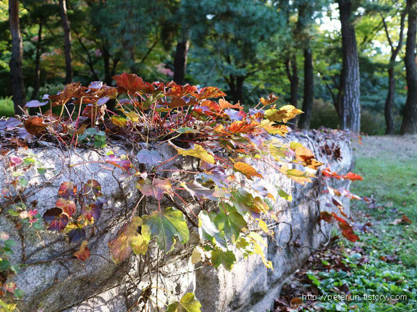돌 위에 가을이 오다